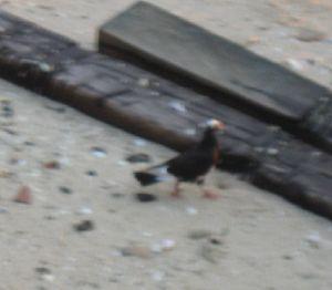 pantai-burung