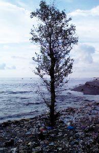 sampah di pantai Taman Loang Baloq