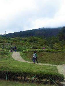 Gedong Songo-taman