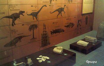 Museum NTB-jaman prasejarah