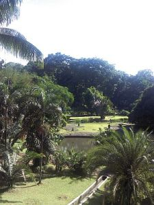 Kebun Raya Bogor juga Asyik untuk Piknik