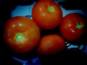 Tomat Beef yang Sedang dan Cantik