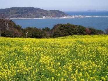 Padang Bunga di Pulau Nokonoshima (sumber: http://jepang.panduanwisata.id/2013/12/07/cantiknya-padang-bunga-di-nokonoshima-island-fukuoka/)