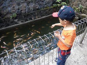 Memberi Makan Ikan Disukai Anak-anak