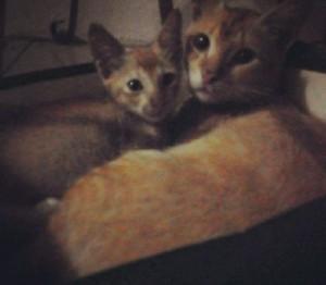 Dua kucing