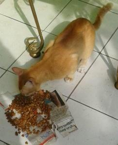 Nero kucing