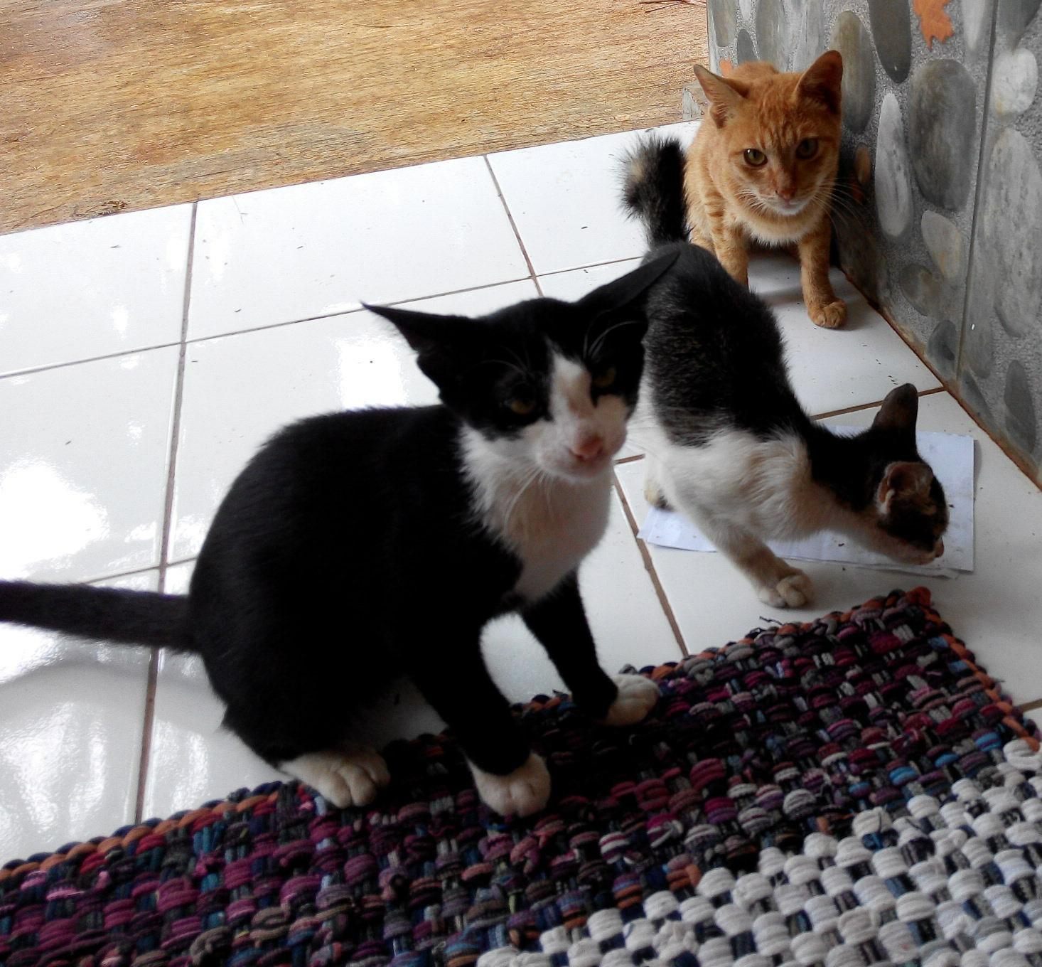 Nero Dan Kucing Kucing Rumah Petak Dewipuspasari S Weblog