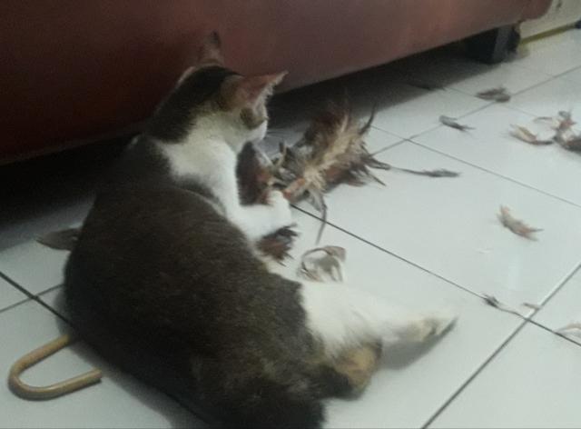 Gara Gara Ini Kucingku Menggila Dewipuspasari S Weblog