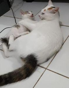 hidup kucing itu keras bung