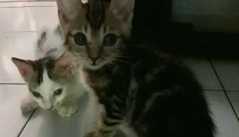 Diary Istri Upik Para Kucing Pengamen Dewipuspasari S Weblog