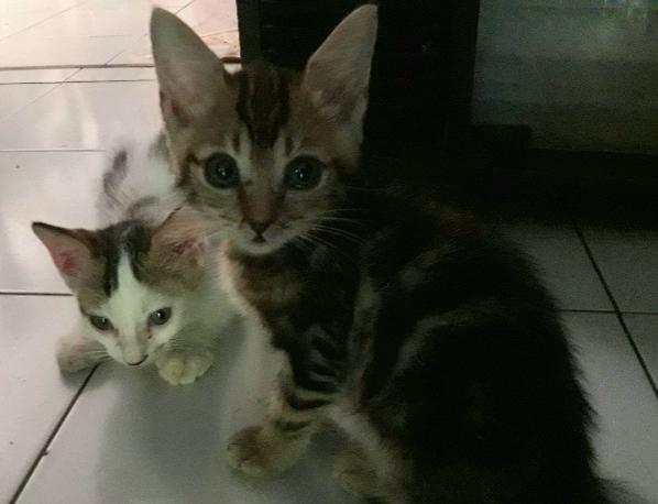 Nasi Kucing Ketiga Keempat Dewipuspasari S Weblog