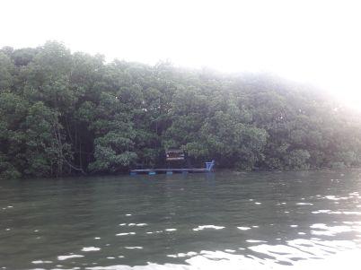 hutan magrove bontang
