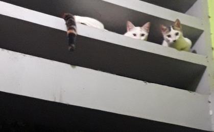Kucing nyangkut