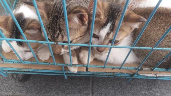 3 kucing
